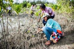 Phetchaburi泰国, 6月9日:泰国在d的学生植物年轻树 免版税库存图片