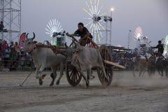 PHETCHABURI,泰国- 2月18 :母牛赛跑是传统 免版税库存照片