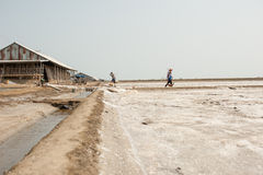 PHETCHABURI,泰国- 2月13 :运载从盐的泰国工作者盐种田2015年2月13日在Phetchaburi,泰国 它是a 库存图片