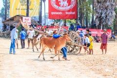 PHETCHABURI - FEBRUARI 22: tävlings- festival för 143. ko Royaltyfria Bilder