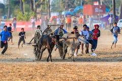 PHETCHABURI - FEBRUARY 22 : 143rd Cow Racing Festival Royalty Free Stock Photo