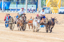 PHETCHABURI - FEBRUARY 22 : 143rd Cow Racing Festival Royalty Free Stock Images