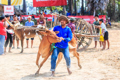 PHETCHABURI - FEBRUARY 22 : 143rd Cow Racing Festival Stock Images