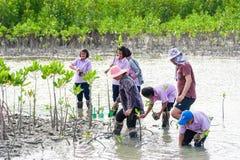 Phetchaburi Tailandia, il 9 giugno: Giovane albero della pianta tailandese dello studente nella d fotografia stock