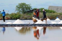 Phetchaburi, Tailandia - 9 settembre 2015: Agricoltura in Thaila Fotografie Stock Libere da Diritti