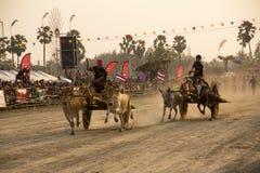 PHETCHABURI, Thailand - FEBRUARI 18: De koe die is de traditie rennen Stock Afbeelding