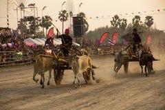 PHETCHABURI, Thailand - FEBRUARI 18: De koe die is de traditie rennen Royalty-vrije Stock Afbeelding