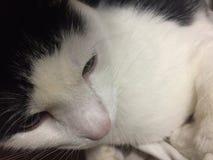 Phi de Kitty foto de archivo