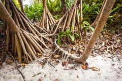 Phi-Phi cave Stock Photos