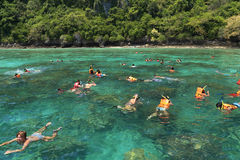 Οι τουρίστες απολαμβάνουν με την κολύμβηση με αναπνευστήρα σε μια τροπική θάλασσα Phi Phi στο isla Στοκ Εικόνα