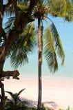 Phi Phi Islands - Thailand Stock Photo