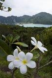 Phi van Ko Phi trekt aan   Stock Fotografie
