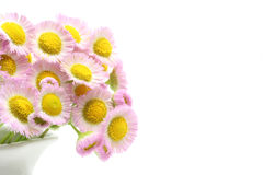 Philadelphia fleabane Stock Photography