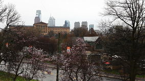 Philadelphia, Pennsylvania cityscape with blossoms in the foreground stock video