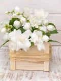 Philadelphus coronarius bouquet on the white background Stock Images