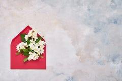 Philadelphus o flores mofa-anaranjadas en sobre rojo en fondo colorido Endecha plana de Birhday, día de madres, soltera, fotografía de archivo libre de regalías