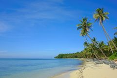 Philippine Beach with palm trees Stock Image