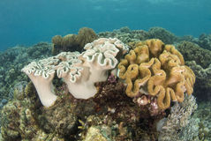 Philippine Coral Reef Stock Photo