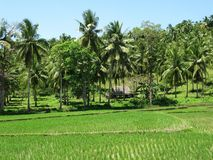 Philippine countryside Stock Photos