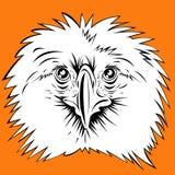 Philippine eagle Stock Image