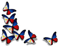 Philippine flag butterflies, isolated on white. Background Royalty Free Stock Photography