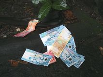 Philippine Money on the Ground. Is there money in trash or in the environment? Money on wet ground. Scattered Peso bills royalty free stock photography