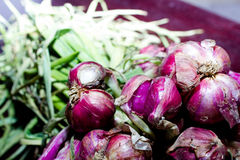 Philippine onion Royalty Free Stock Photo