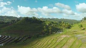 Philippine paddy fields. Aerial views. Beautiful nature. Bohol island. Philippine paddy fields Beautiful nature Bohol island stock video