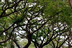 Philippinen-Landschaft Stockbild