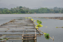 Philippinen, Mindanao, See Sebu Lizenzfreies Stockfoto