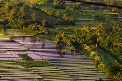 Philippinen-Reisterrassen Lizenzfreie Stockfotos