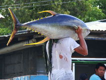 Philippines#11的黄鳍金枪鱼手工渔业 免版税库存照片