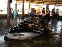 Philippines#20的黄鳍金枪鱼手工渔业 库存图片