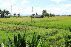 philippines Photos libres de droits