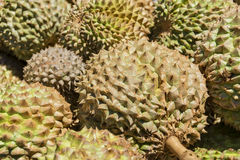 Philippines Durian Royalty Free Stock Images