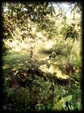 Philippines. Landscape nature stock photos