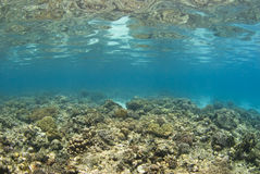 Philippines Reefscape Stock Photo