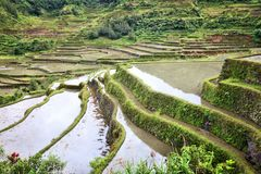 Philippines rice terraces. Rice cultivation in Hapao village (Hungduan royalty free stock photos