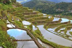 Philippines rice terraces. Rice cultivation in Hapao village (Hungduan royalty free stock photo