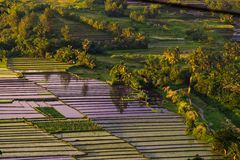 Philippines rice terraces. Rice terraces in Luzon island, Philippines Royalty Free Stock Photos