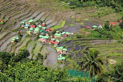 Batad rice fields. Philippines rice terraces - rice cultivation in Batad village (Banaue area Royalty Free Stock Photography