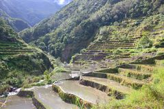 Philippines rice paddies. Philippines rice terraces - rice cultivation in Hapao village (Hungduan royalty free stock image
