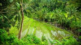 Philippinische Reis-Terrassen lizenzfreie stockfotos