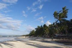 Philippinischer weißer Sandstrand in Bohol mit Schatten von Kokosnussbäumen Stockbilder