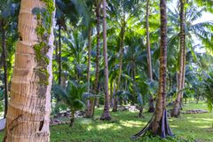 Philippino热带密林森林 免版税库存图片