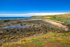 Phillip Island royalty-vrije stock foto