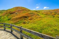 Phillip Island Nature Park Arkivfoto