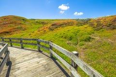 Phillip Island Nature Park-Spur Lizenzfreie Stockfotografie