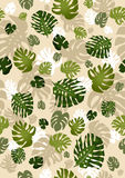 Philodendron leaves seamless Royalty Free Stock Photo