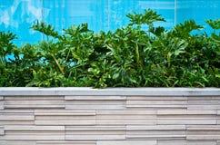 Philodendron xanadu plant in modern flowerpot Stock Photography
